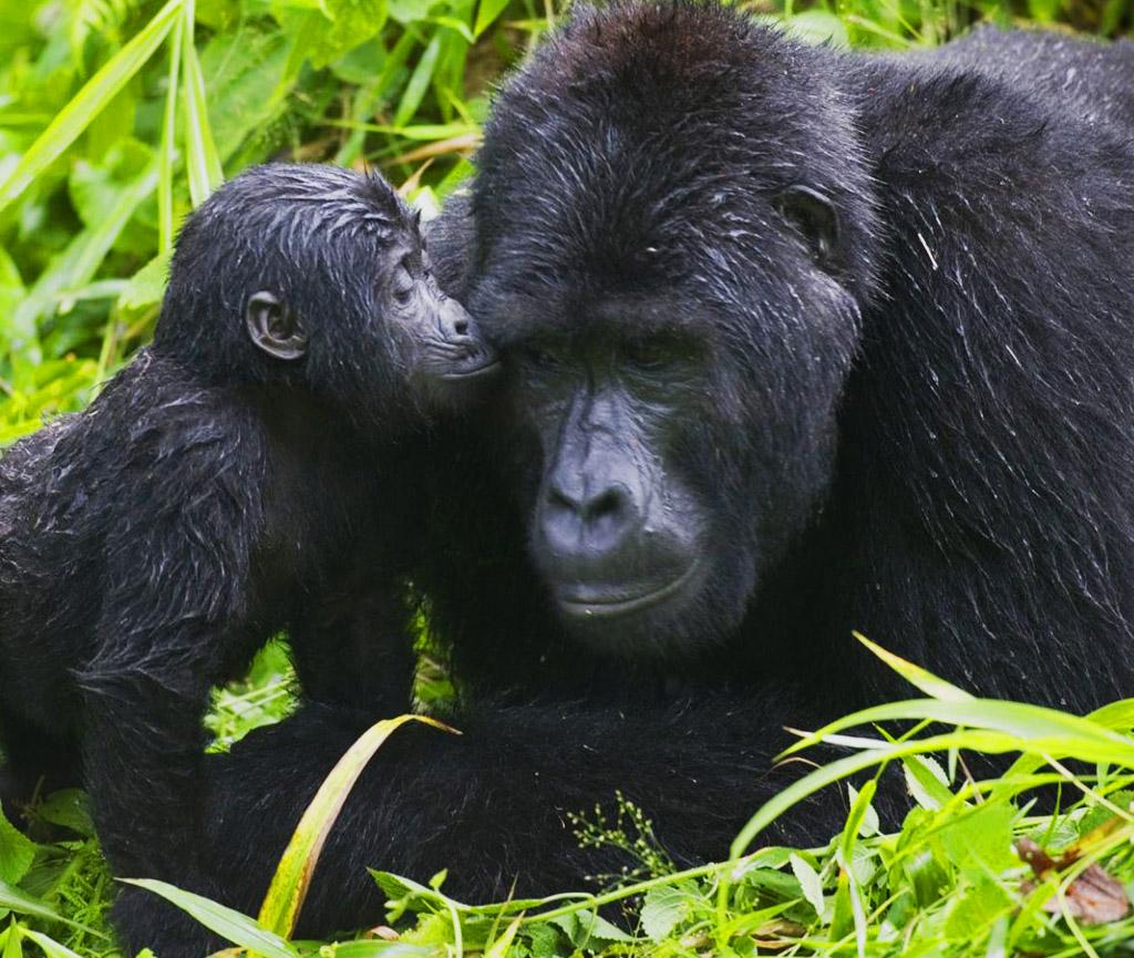 6 days gorillas rwanda