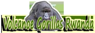 Volcanoe Gorillas Rwanda