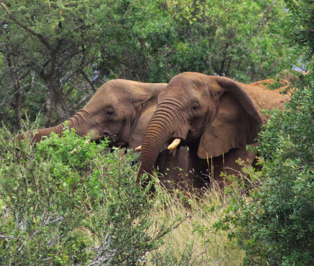 2 Days Akagera Safari
