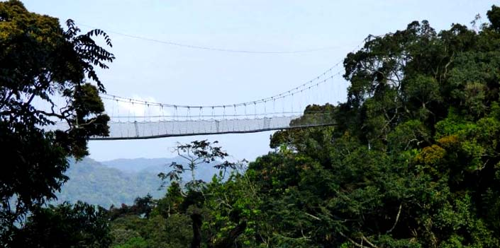 2 days canopy walk chimps nyungwe forest national