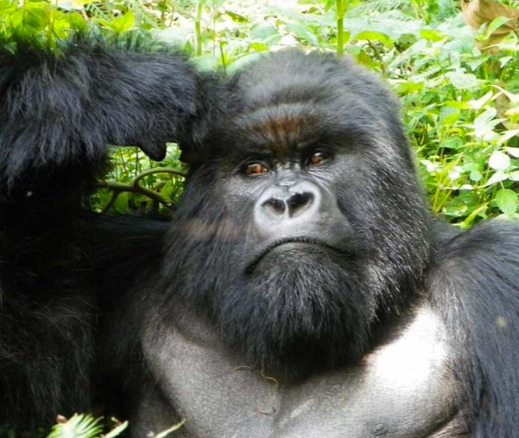 3 Days Gorillas - Gisenyi